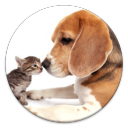 Pet Care Tips 1.2 for Android
