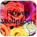 Flowers Wallpapers 1.5 for Android