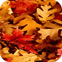 Fall Leaves Wallpapers 1.0 for Android