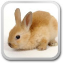 Bunny opener live wallpaper 1.0 for Android