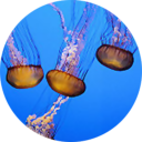 Fish Aquarium 1.0 for Android