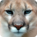 Puma HD Live Wallpaper 1.0 for Android