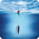 Fishing HD Live Wallpaper 1.0 for Android