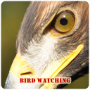 Bird Watching 1.0 for Android