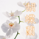 With all my Phalaenopsis mail order cheap. Net ~ opening, opening, and quality gift heart 1.0 for Android