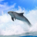 Dolphins 3D. Live Wallpaper. 3.5 for Android