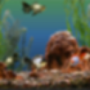 Wallpaper_Aquarium 1.0.0 for Android