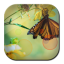 Wallpaper Flowers n Butterfly 1.0.4 for Android