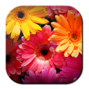 Image HD Flowers 1.0 for Android