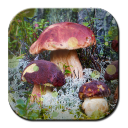 Wallpaper Mushrooms 1.0.4 for Android