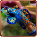 Aquarium Live wallpapers 1.0.1 for Android