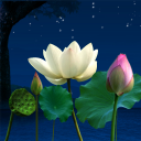 Lotus Pond 3.6 for Android