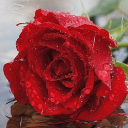 Red Rain Rose Live Wallpaper 26 for Android