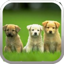 Dog Matching 2.2 for Android