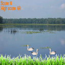 Goose shooter 1.0 for Android