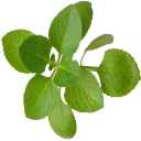 Benefits of Oregano 1.0 for Android