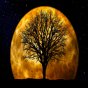 Moon Silhouette Live Wallpaper 1.1 for Android