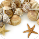 Sea shells Live wallpaper 1.0 for Android