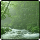 Tranquil Forest River Live Wallpaper 1.0 for Android