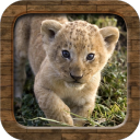 the animal sounds song nursery 1.0 for Android