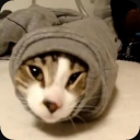 Best Funny Cat Videos FREE 1.2 for Android