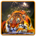 Tiger and Magic Live Wallpaper 1.0 for Android