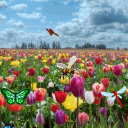 Tulip Garden Live Wallpaper 26 for Android