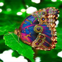 Multicolor Butterfly LWP 2 for Android