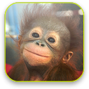 Monkey Video Wallpaper 1.1 for Android