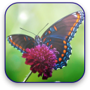 Butterfly Video Wallpaper 1.1 for Android