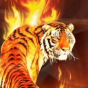 # # Tiger Flames Live Wallpaper 26 for Android
