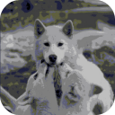 Wolf Family LWP 1.0.1 for Android