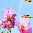 #Spring Daisy Butterfly Live Wallpaper 26 for Android