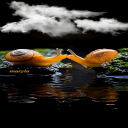 # # # Kissing Snails Live Wallpaper 1 for Android