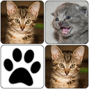 Cats Memory Game 2015 1.0 for Android