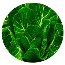 Benefits of Collard 3.0 for Android