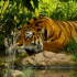 Jungle Paradise Live Wallpaper 26 for Android