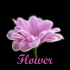 Flower 1.1.6 for Android